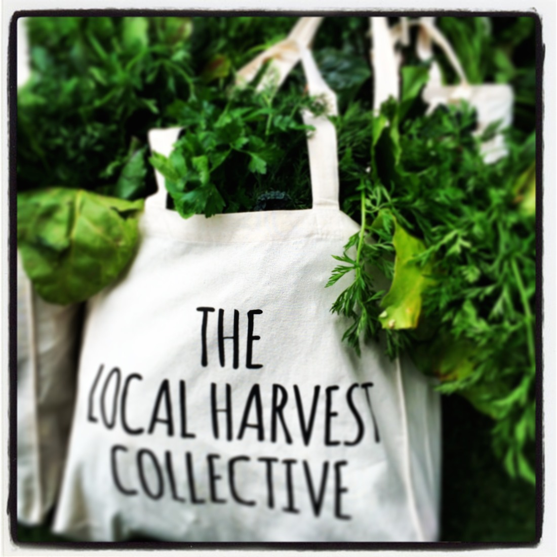 The Local Harvest Collective